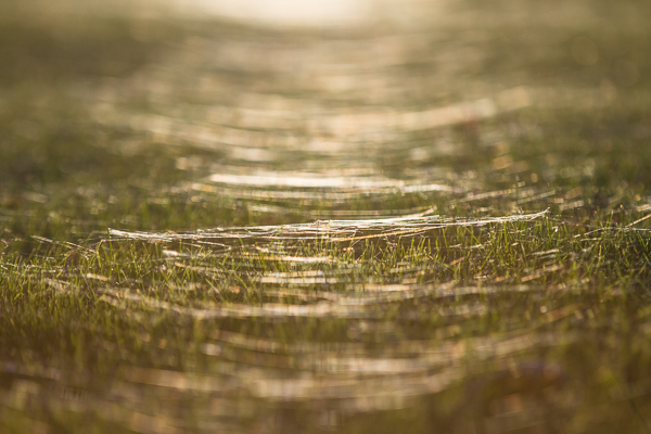 20151103spiders-74